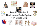 TAKS Objective 2 (Blitz) The Human Body System
