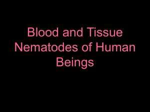 Blood and Tissue Nematodes of Human Beings