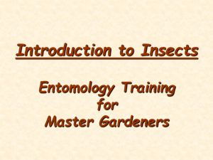 Basic Entomology - University of Florida