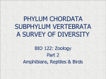 phylum chordata a survey of its diversity - Newberry