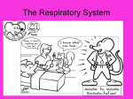 Respiratory System of Pig