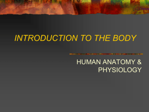INTRODUCTION TO THE BODY