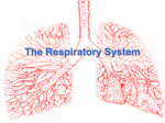 The Respiratory System Notes