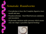 Nematoda: Roundworms