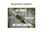 Lungs Powerpoint