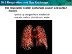 30.2 Respiration and Gas Exchange