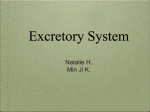 Diseases and Disorders of the Excretion System - kis