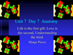 Unit 7 Day 7 Anatomy