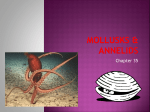 Ch 35 Mollusks and Annelids