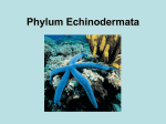 Phylum Echinodermata - District Five Schools of