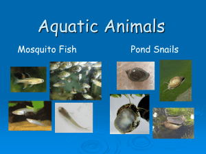 Aquatic Animals PowerPoint