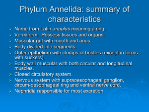 Topic 6 Annelids