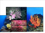 Life on a Coral Reef Types of Reefs Three major types of coral reefs