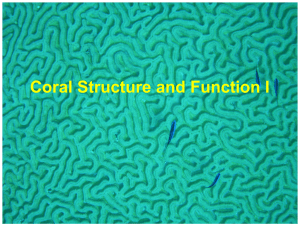 Corals - Structure and Function I