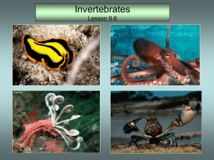 Soft-bodied animals that usually have in internal or external shell