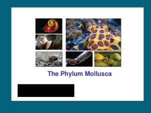 Mollusca Overview - Solon City Schools