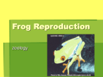 Frog Reproduction