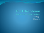 The Echinoderms