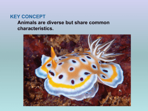 Animals are the most physically diverse kingdom of