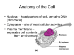 Cell anatomy and cell division