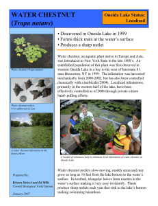 Water Chestnut Factsheet (pdf - 135kb)