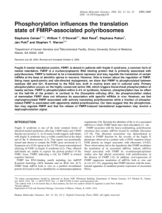 Ceman, S, O Donnell, WT, Reed, M, Patton, S, Pohl, J and Warren, ST: Phosphorylation regulates translation state of FMRP-associated polyribosomes. Human Molecular Genetics 12:3295-3305 (2003).