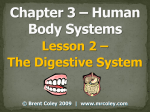 Lesson 2 – The Digestive System