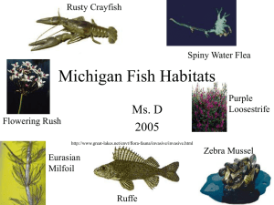 Michigan Fish Habitats Ms. D 2005 Rusty Crayfish