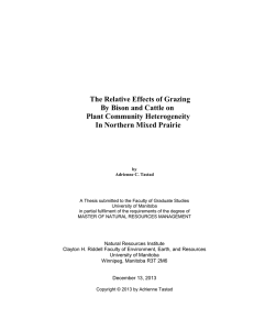 The Relative Effects of Grazing By Bison and Cattle on
