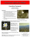 Carolina Fanwort *Detected in Michigan*