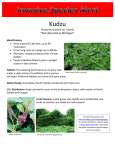 Kudzu *Not detected in Michigan*
