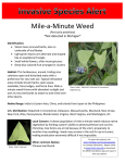 Mile-a-Minute Weed *Not detected in Michigan*