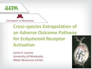 Cross-species Extrapolation of an Adverse Outcome Pathway for Ecdysteroid Receptor Activation