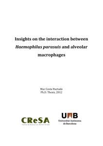 Insights on the interaction between  macrophages  Haemophilus parasuis