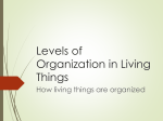 Levels of Organization in Living Things How living things are organized