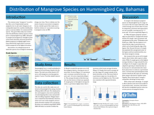 Distribution of Mangrove Species on Hummingbird Cay, Bahamas Introduction