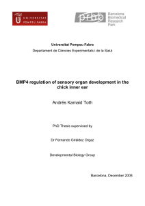 BMP4 regulation of sensory organ development in the chick inner ear