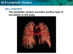 30.6 Lymphatic System KEY CONCEPT The lymphatic system provides another type of