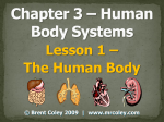 Lesson 1 – The Human Body