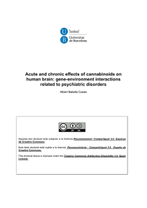 Acute and chronic effects of cannabinoids on human brain: gene-environment interactions