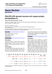 Gene Section PHLPP2 (PH domain leucine-rich repeat protein phosphatase 2)