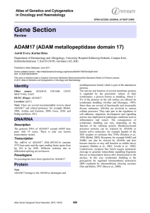 Gene Section ADAM17 (ADAM metallopeptidase domain 17) Atlas of Genetics and Cytogenetics