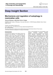Deep Insight Section Mechanisms and regulation of autophagy in mammalian cells