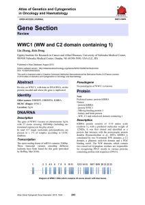 Gene Section WWC1 (WW and C2 domain containing 1)