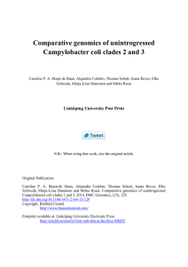 Comparative genomics of unintrogressed Campylobacter coli clades 2 and 3