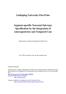 Linköping University Post Print Segment-specific Neuronal Sub-type Specification by the Integration of