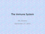 The Immune System Mr. Alvarez December 17, 2013