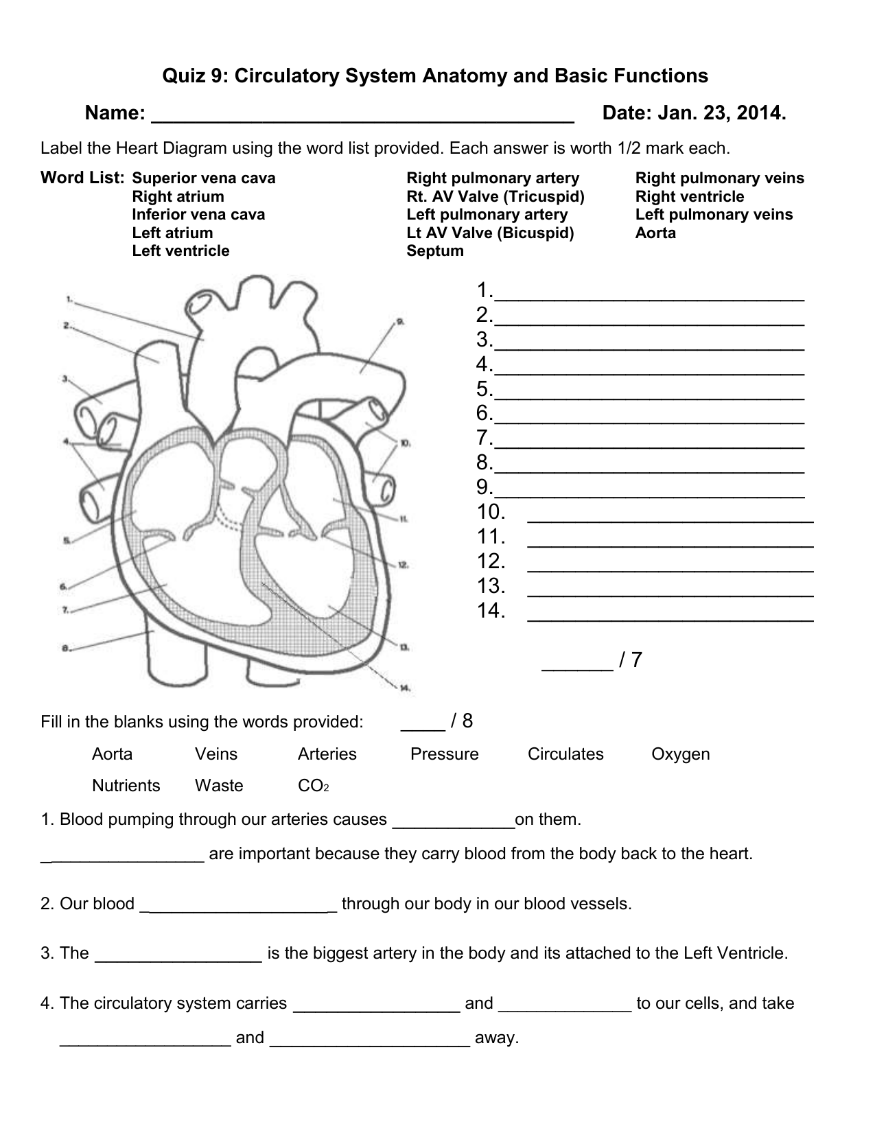 Quiz 9: Circulatory System Anatomy and Basic Functions