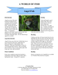 care sheet for angel fish