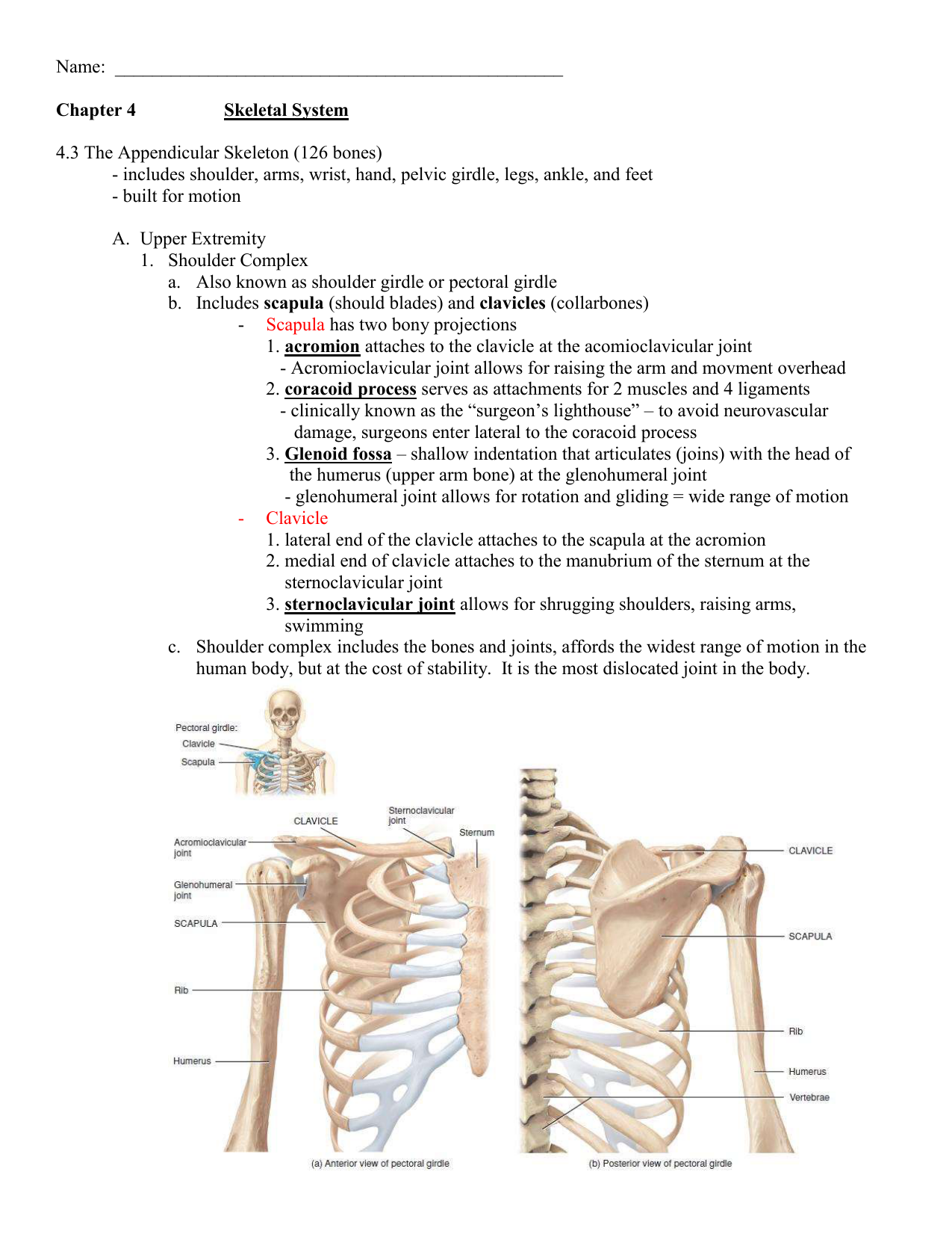 worksheet Appendicular Skeleton Worksheet 4 3 appendicular skeleton